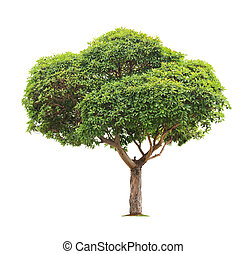 fond, arbre, blanc