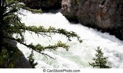 fond, arbre diverge, eau, écoulement