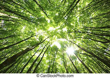 fond, arbres