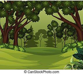 fond, arbres, scène, profond, forêt