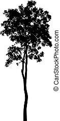 fond, blanc, arbre, isolé