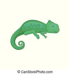 fond, caméléon, illustration, vecteur, amphibie, animal, blanc
