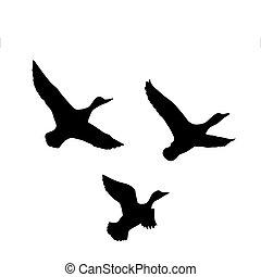 fond, canard, vecteur, voler, silhouette, blanc