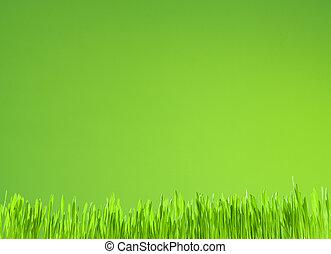 fond, croissance, vert, propre, frais, herbe