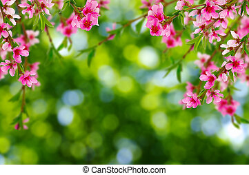 fond, doux, fleur, printemps, barbouillage