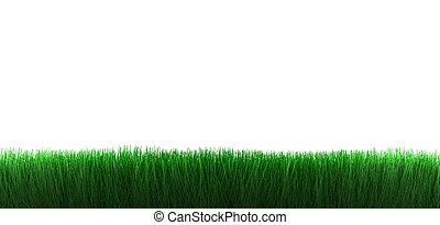 fond, herbe, blanc