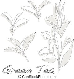 fond, isolé, blanc, feuille verte, thé