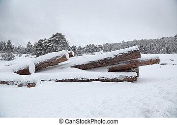 fond, neige, piles, bois construction, forêt
