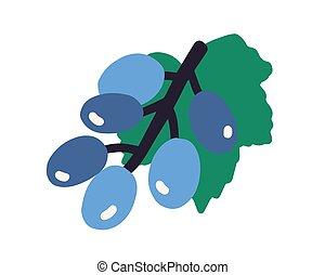 fond, raisin, coloré, dessiné, main, fruits, tas, illustration, mûre, plat, blanc, pourpre, vecteur, branche, pendre, isolé, leaf.