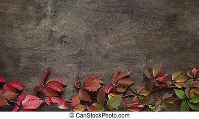 fond, space., rouges, bois, vieux, jeune fille, feuilles, copie, quinquefolia, arrière-plan brun, automne, treelike, vert, vue, raisin, plat, parthenocissus, time.branch, poser, sommet, concept