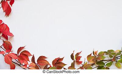 fond, space., rouges, jeune fille, feuilles, copie, quinquefolia, fond blanc, automne, treelike, vert, vue, raisin, plat, parthenocissus, time.branch, poser, sommet, concept