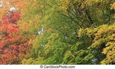 forêt automne, coloré