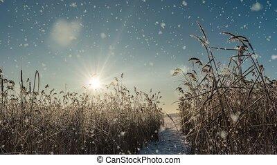 forêt, blanc lumineux, vidéo, boucle, temps, arbres, hiver, ensoleillé, lumière, boucle, jour, paysage nature, cinemagraph, tomber, froid, mood., neige