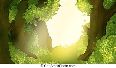 forêt brumeuse, paysage, matin