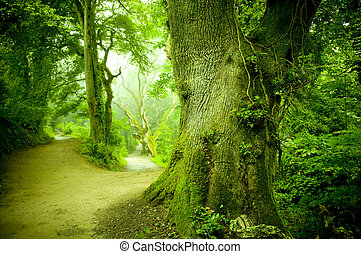 forêt, chemin