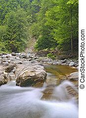forêt, chutes d'eau