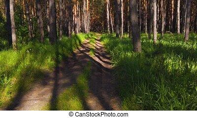 forêt, day., été, beauté, ensoleillé