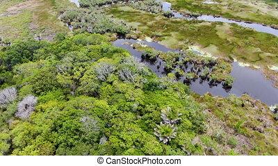forêt, exotique, pluie, brésil, vue aérienne, jungle