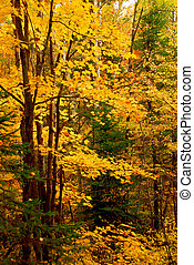 forêt, fond, automne