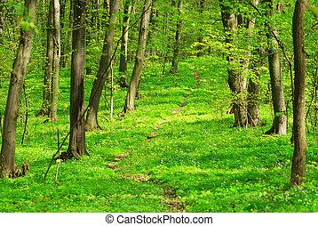 forêt, fond, vert