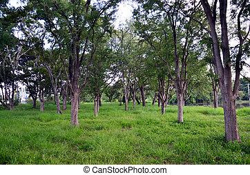 forêt, jardin