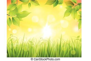 forêt, levers de soleil
