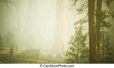 forêt, lumières, fantasme, magique, luciole