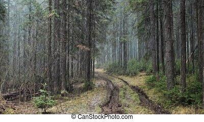 forêt, premier, neige