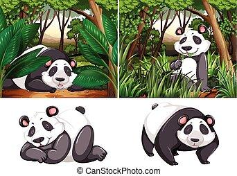 forêt, profond, panda