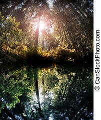 forêt, reflet