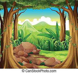 forêt, rochers