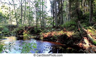 forêt, ruisseau, écoulement