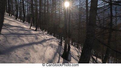 forêt, ski