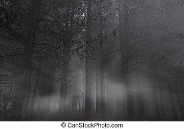 forêt, soir, sombre