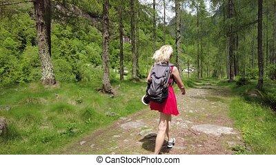 forêt, suisse, randonnée, randonneur