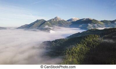 forêt, sur, brumeux, montagnes, défaillance, mouche, hyper