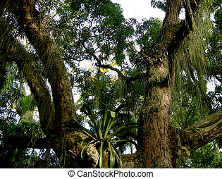 forêt tropicale humide, amazonien, arbre