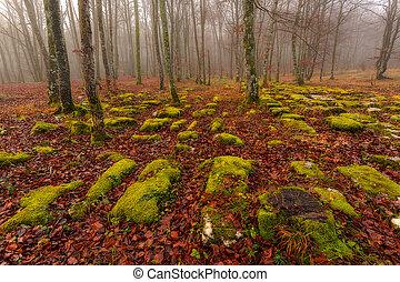 forêt verte