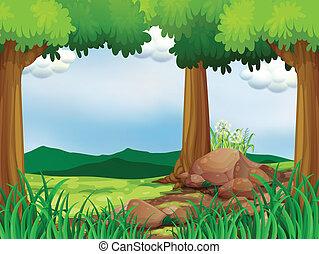 forêt verte, rochers