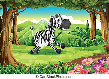 forêt, zebra