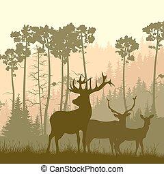 forest., élan, bord, sauvage