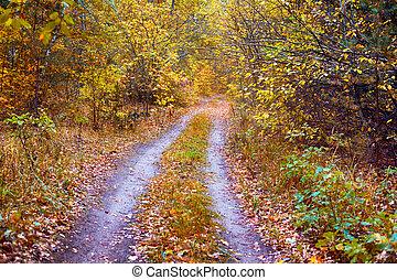 forest., scene., sentier, automne, non-urbain, double