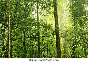 forest., vert