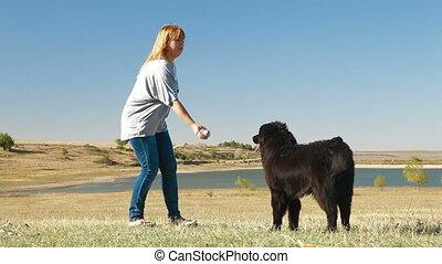 formation, extérieur, chien terre-neuve