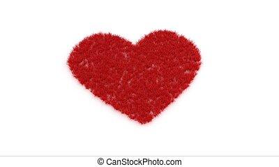 forme coeur, blanc rouge