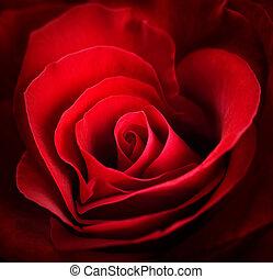 forme coeur, valentin, rouges, rose.