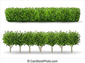 formulaire, buisson, vert, haie