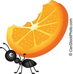 fourmi, orange, porter, tranches