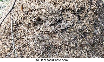fourmis, colonie, nid