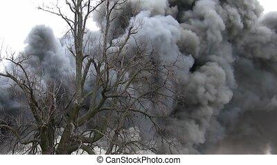 foyer tir, derrière, chêne, smokey